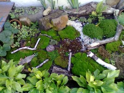 Сад из лишайников